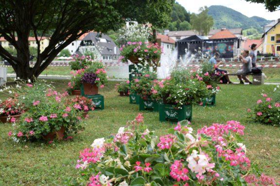pivo-in-cvetje-hortikultura_3